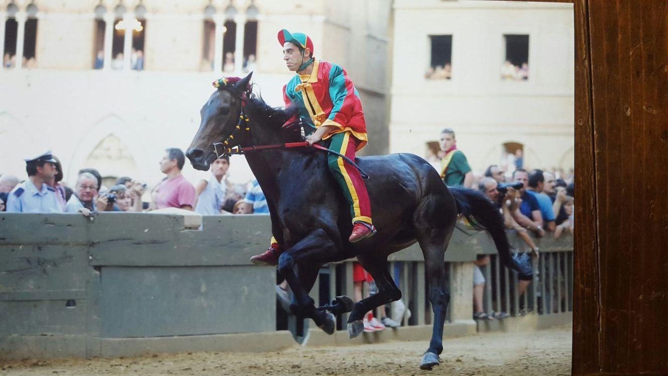 Calcio di un cavallo: frattura della tibia per Alessio Migheli