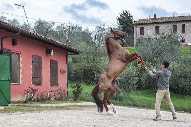 """Iscrizioni dei cavalli al """"Protocollo"""" posticipate al 18 Giugno"""