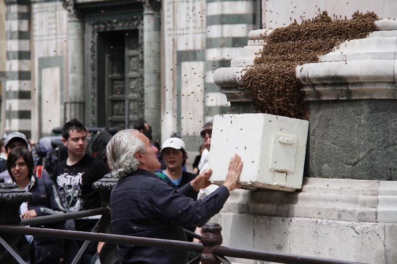 Sciami d'api, ecco cosa fare