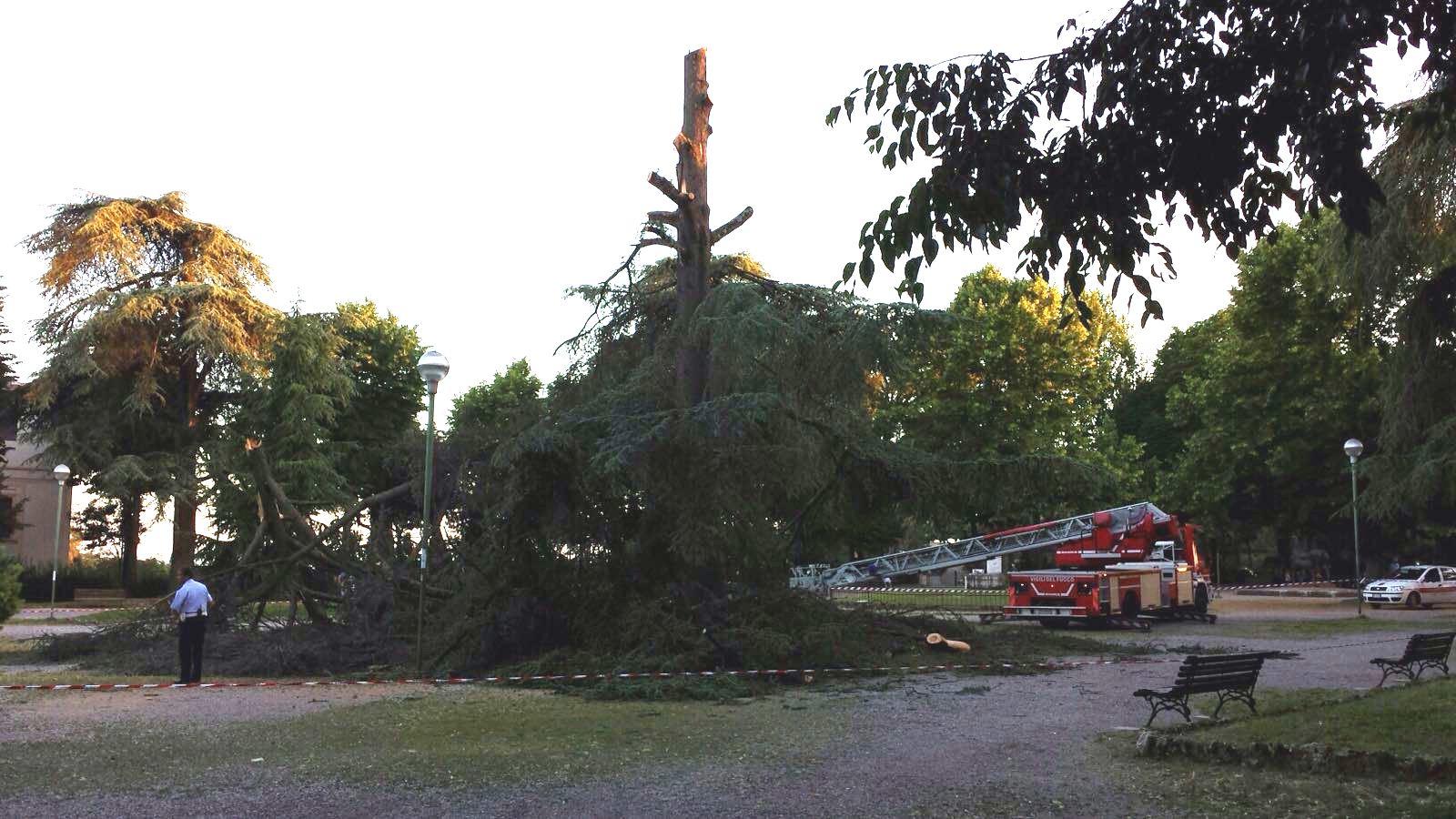 Cade l'albero secolare alla Lizza