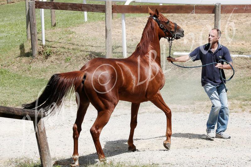 iscrizione dei cavalli