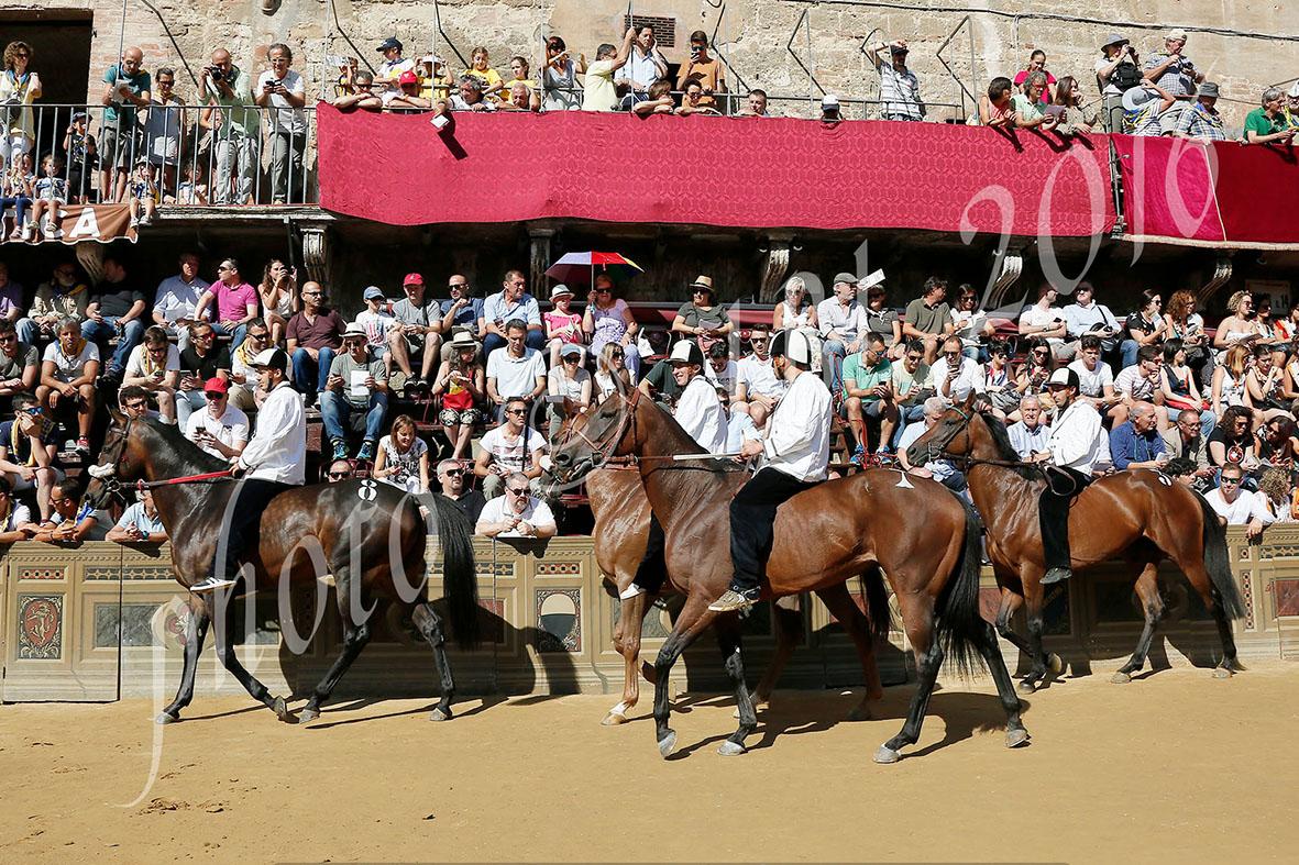 Palio: sono 35 i cavalli ammessi alla Tratta