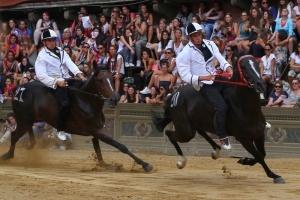 31 i cavalli ammessi alla tratta del 29 giugno