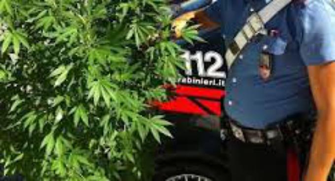 Spaccio di marijuana nei giardini degli Orbachi, denunciato studente 18enne