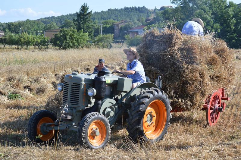 """""""Festa di fine agosto"""" a Pianella: rivive l'antico rito della trebbiatura"""