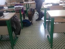 cani-polizia-scuole
