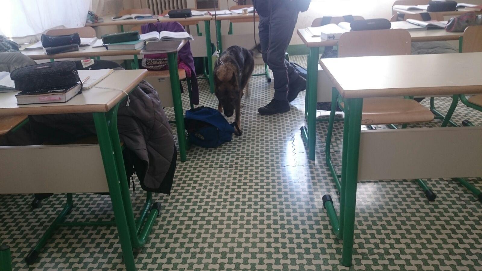 Controlli anti droga, cani poliziotto nelle scuole