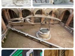 collage-con-corte-al-centro-1