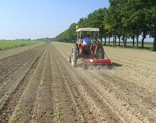 Servono oltre 80mila mascherine al giorno nei campi per gli agricoltori toscani