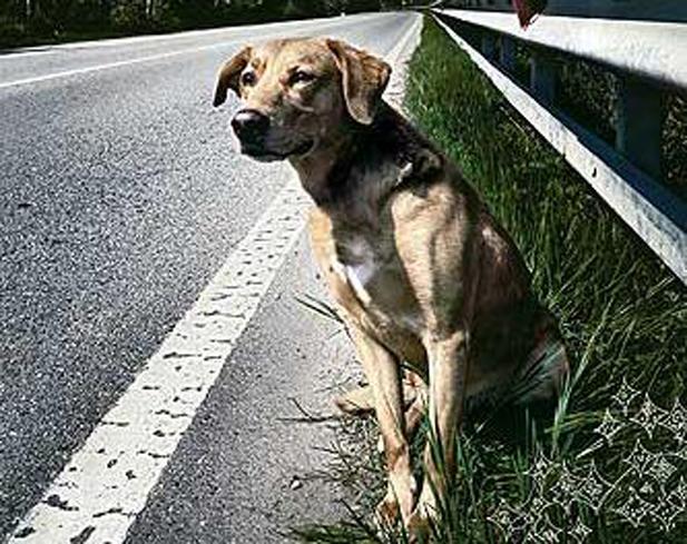 Cattura cani abbandonati: ecco chi chiamare