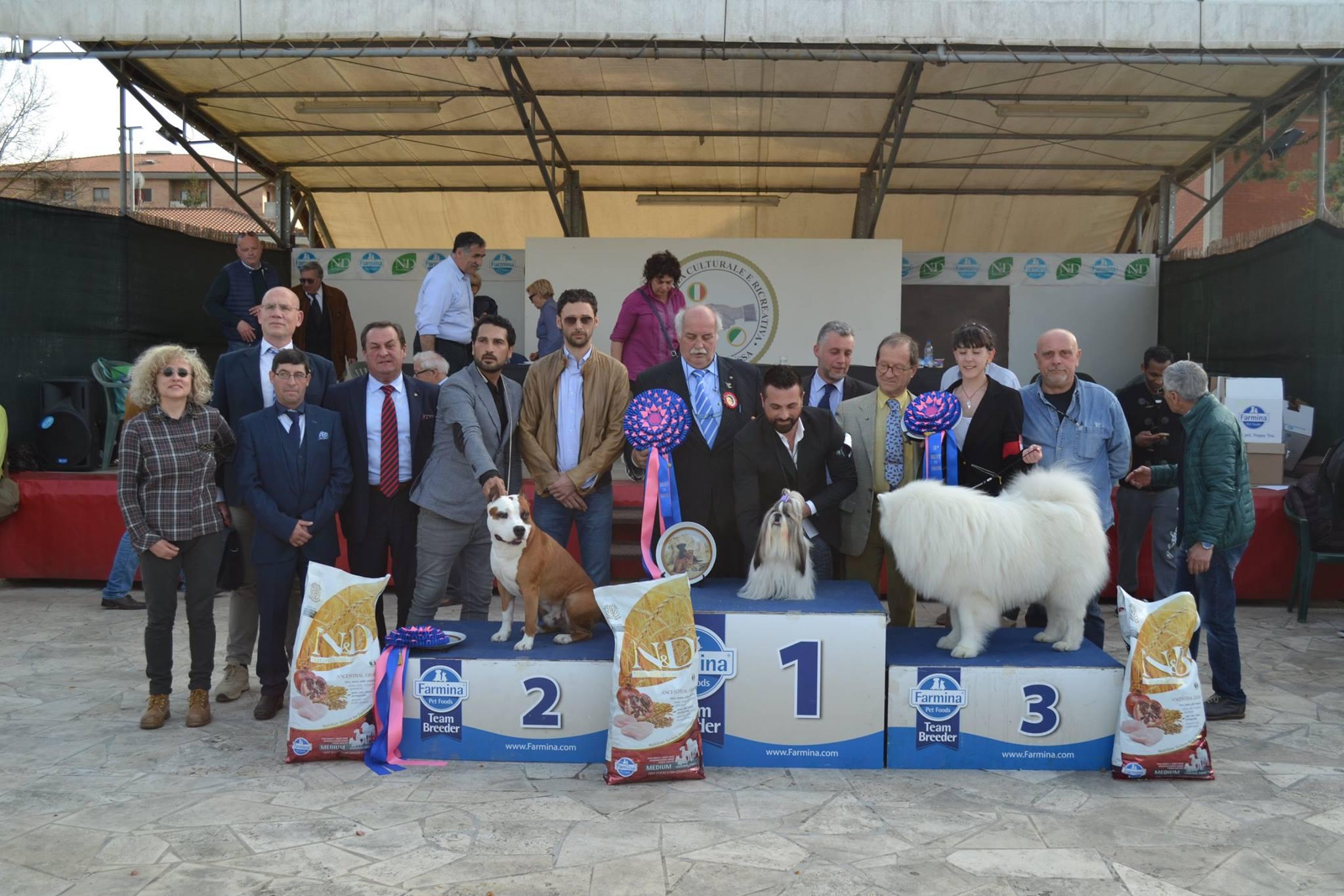 Esposizione Nazionale Canina di Siena: domenica sfilano settecento cani