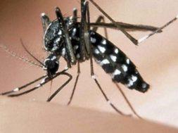 foto-zanzara-tigre-2-2.jpg_221268035