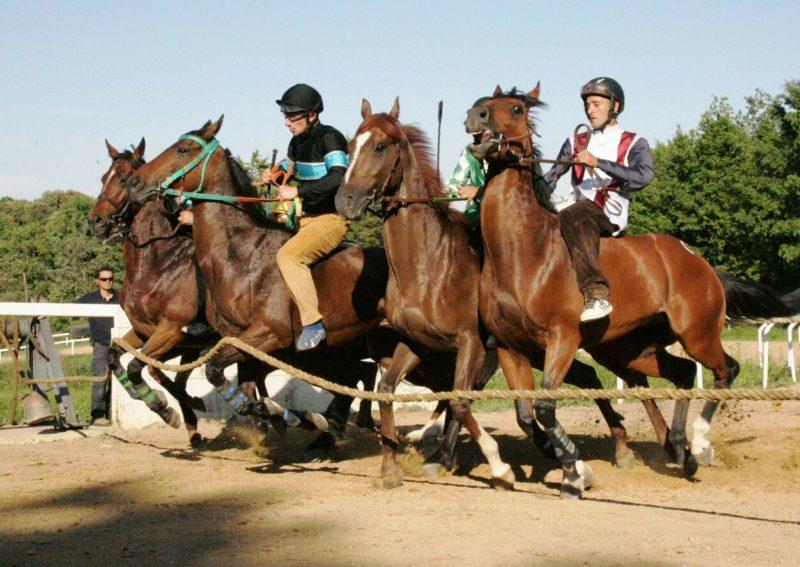 Oggi appuntamento a Monticiano per le corse di addestramento