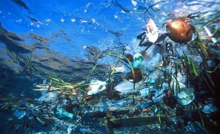 Mediterraneo contaminato da plastica, lo dice uno studio dell'Università di Siena