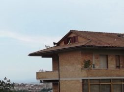 Le foto incredibili: cani sul tetto e Vespe in terrazzo - Radio Siena Tv