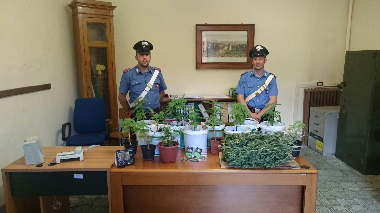 Coltiva piante di marijuana in una casa abbandonata