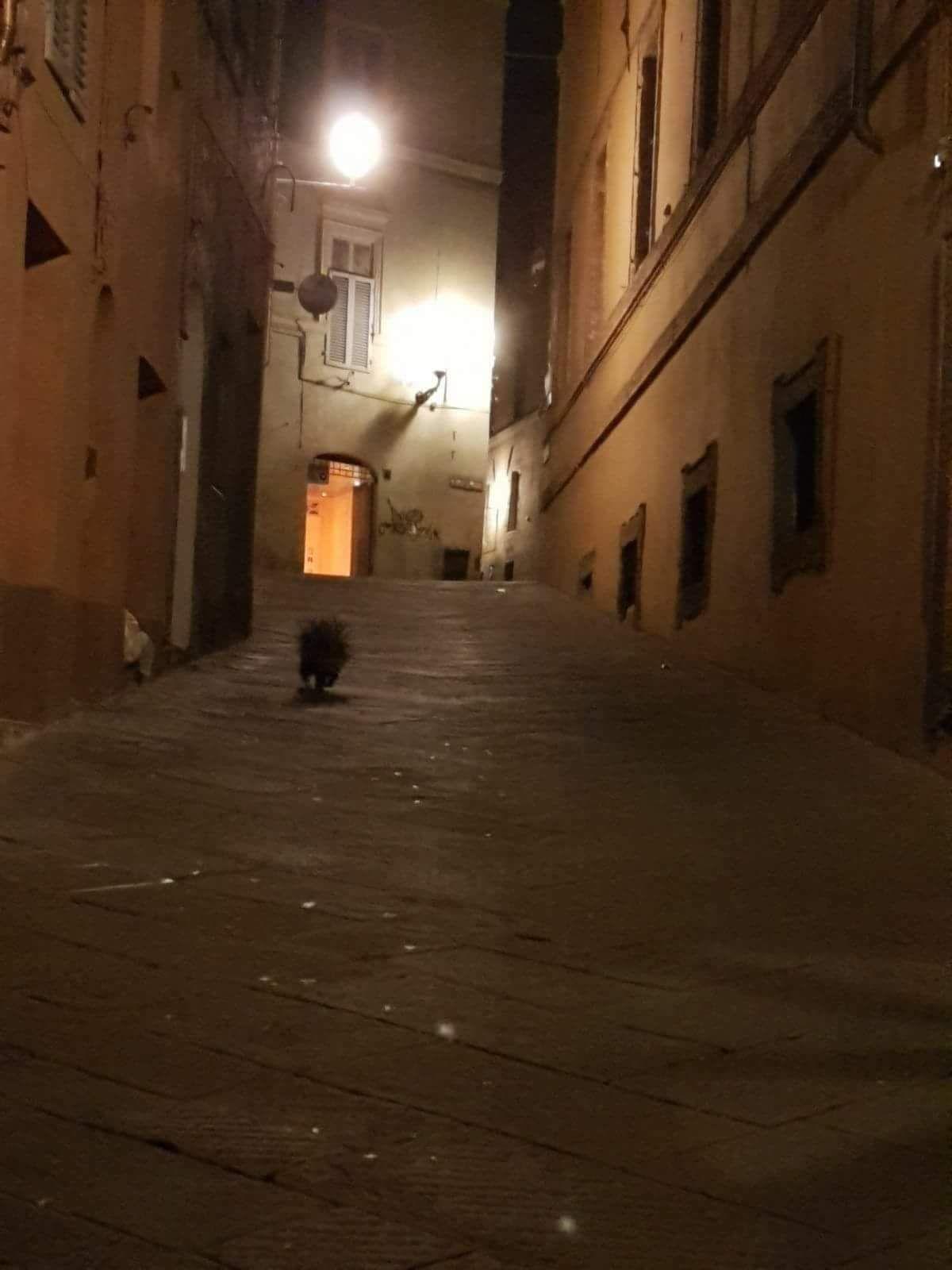 Istrice passeggia in via San Vigilio