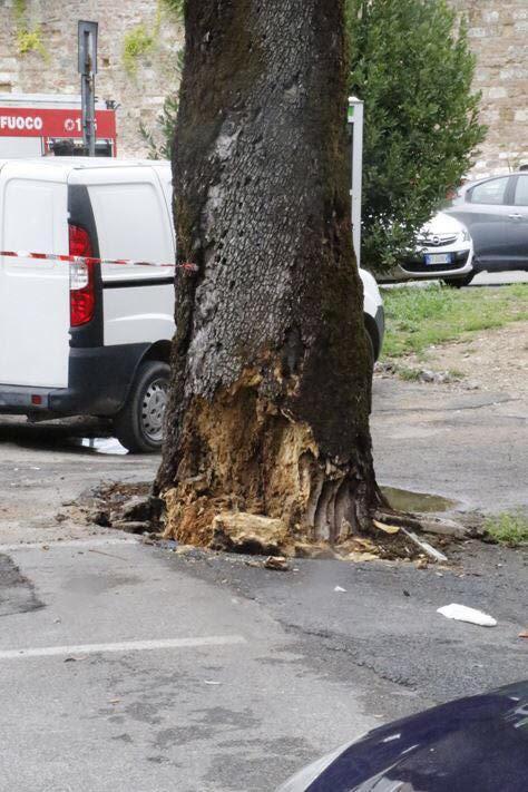 Alberi tagliati in Viale Diaz, non è certo se saranno ripiantati