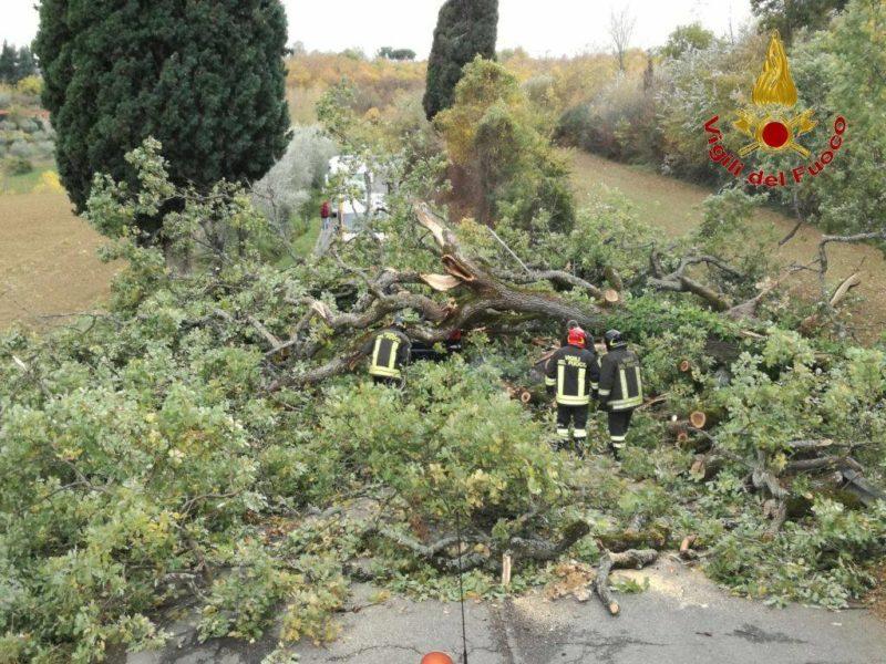 Chianciano, grosso albero cade in strada e colpisce un auto
