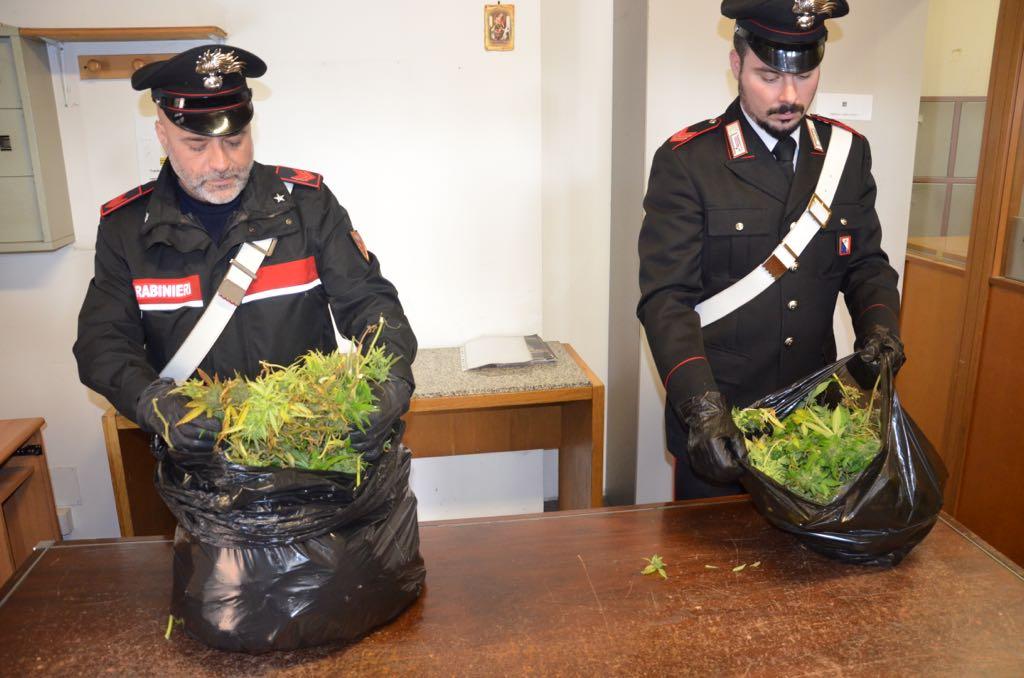 I carabinieri scoprono una serra di marijuana nel garage