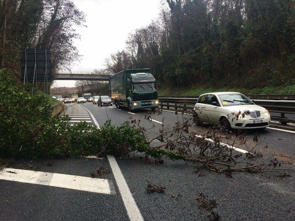 Ramo di un albero crolla sulla Siena-Firenze, viabilità rallentata