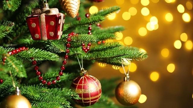 Immagini Di Natale Da Salvare.Parte La Raccolta Di Alberi Di Natale Da Salvare Dalla Discarica E Ripiantare Radiosienatv
