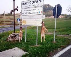 Radicofani, voto unanime per una difesa dai lupi