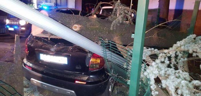 Tempesta di vento ad Abbadia San Salvatore: crollano alberi, tragedia sfiorata