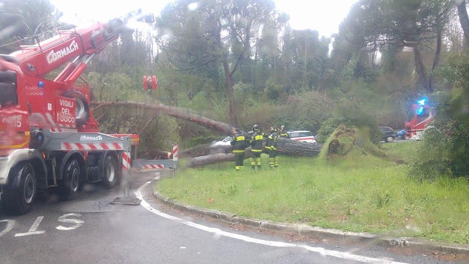 Viale Bracci, crolla un pino per strada
