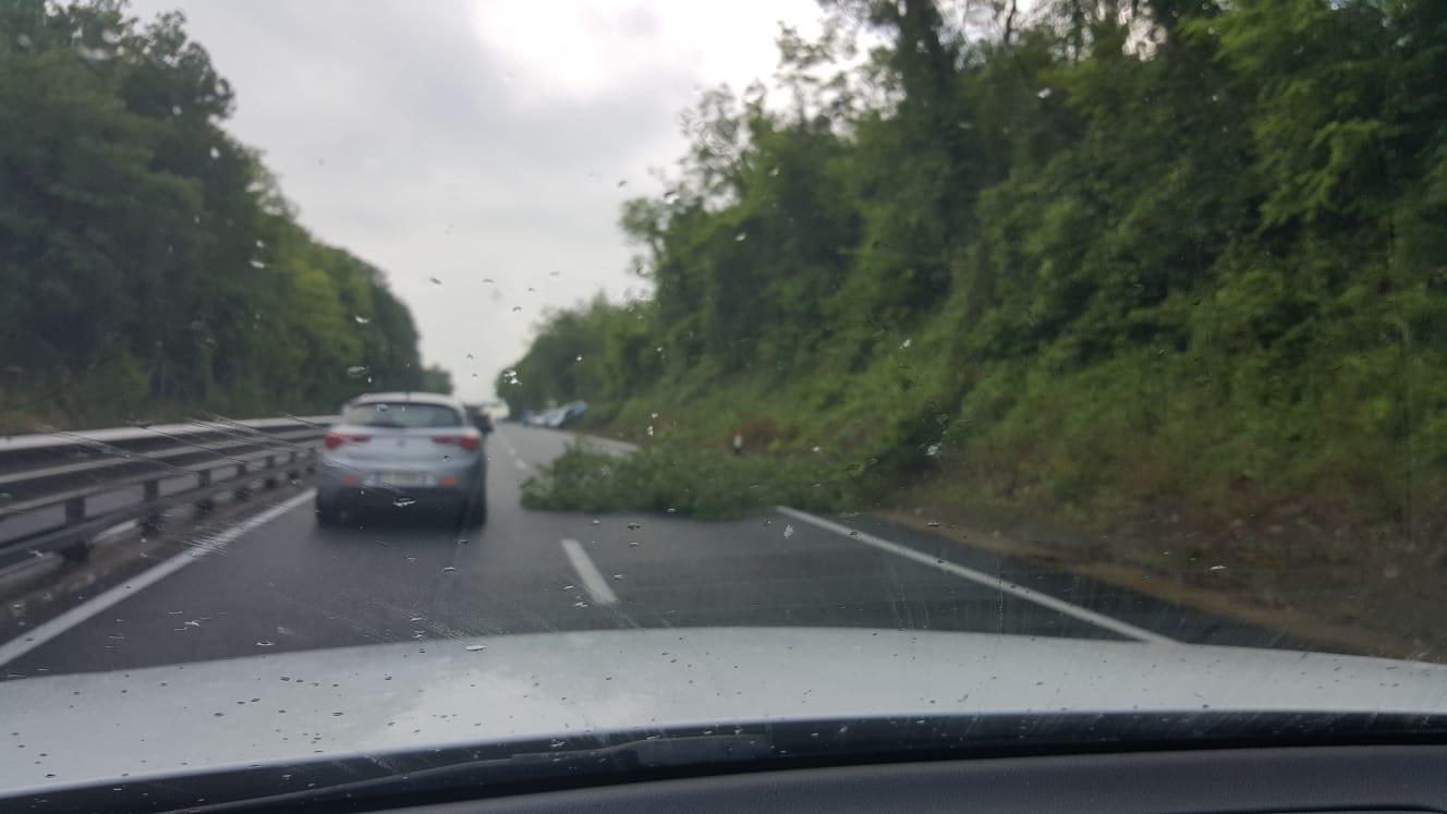 Autopalio, albero cade in strada e provoca un incidente