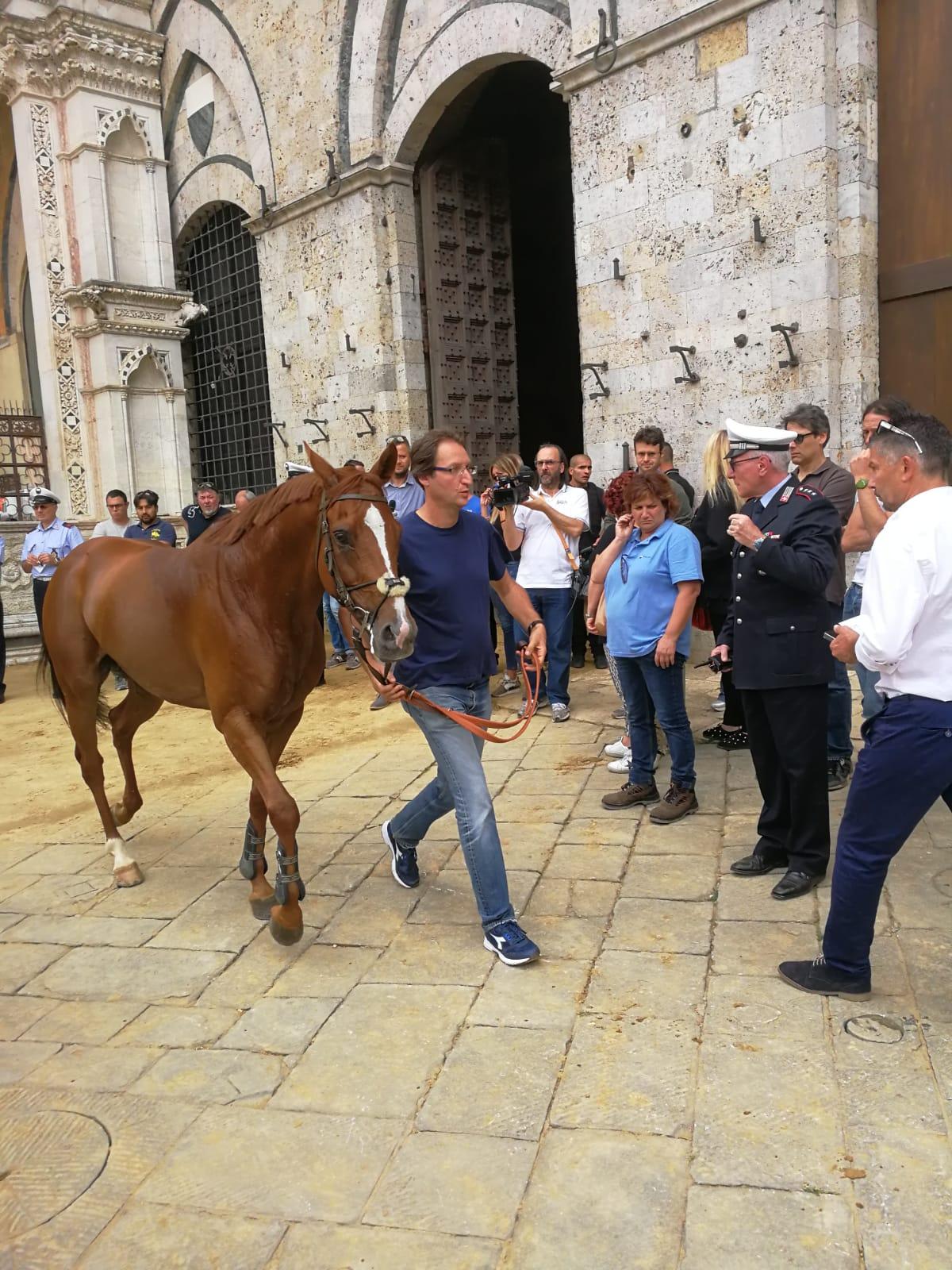 Sono 35 i cavalli ammessi alla Tratta
