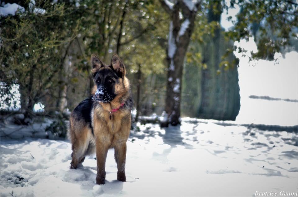 Choc per sospetto avvelenamento di cani nel giardino di casa