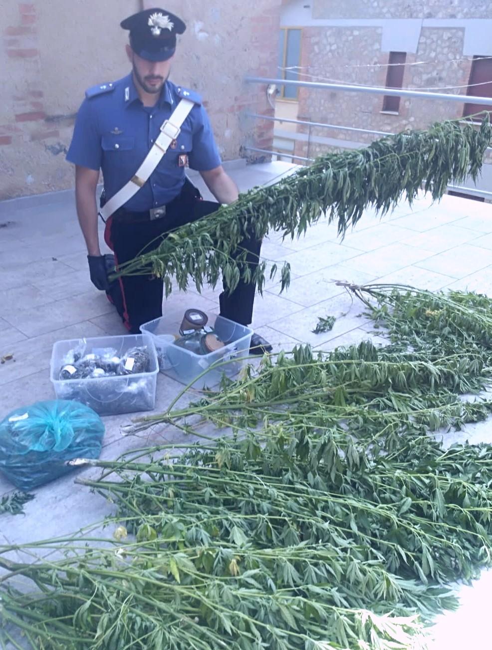 Coltiva marijuana in area boschiva. Arrestato 49enne