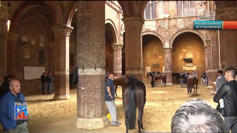 Prove regolamentate, ecco le batterie dei cavalli presenti in Piazza