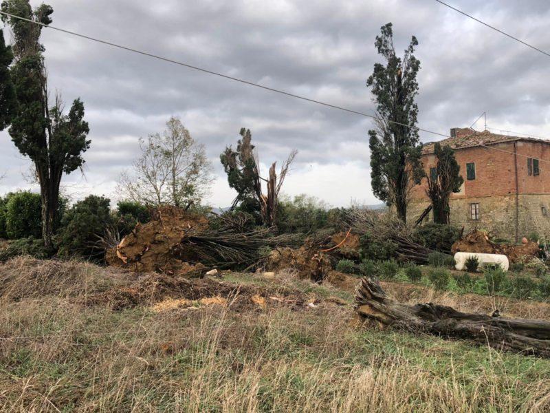 Tempesta di vento in zona Barontoli (FOTO)