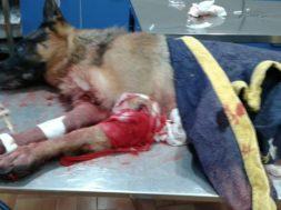 cane ucciso cacciatore