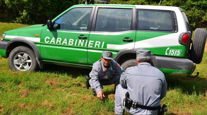Cantiere boschivo sotto sequestro: sette denunce e maxi multa