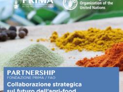 FAO-Social_2019-2