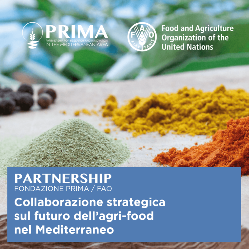 FAO e Fondazione PRIMA, una nuova partnership per promuovere l'innovazione