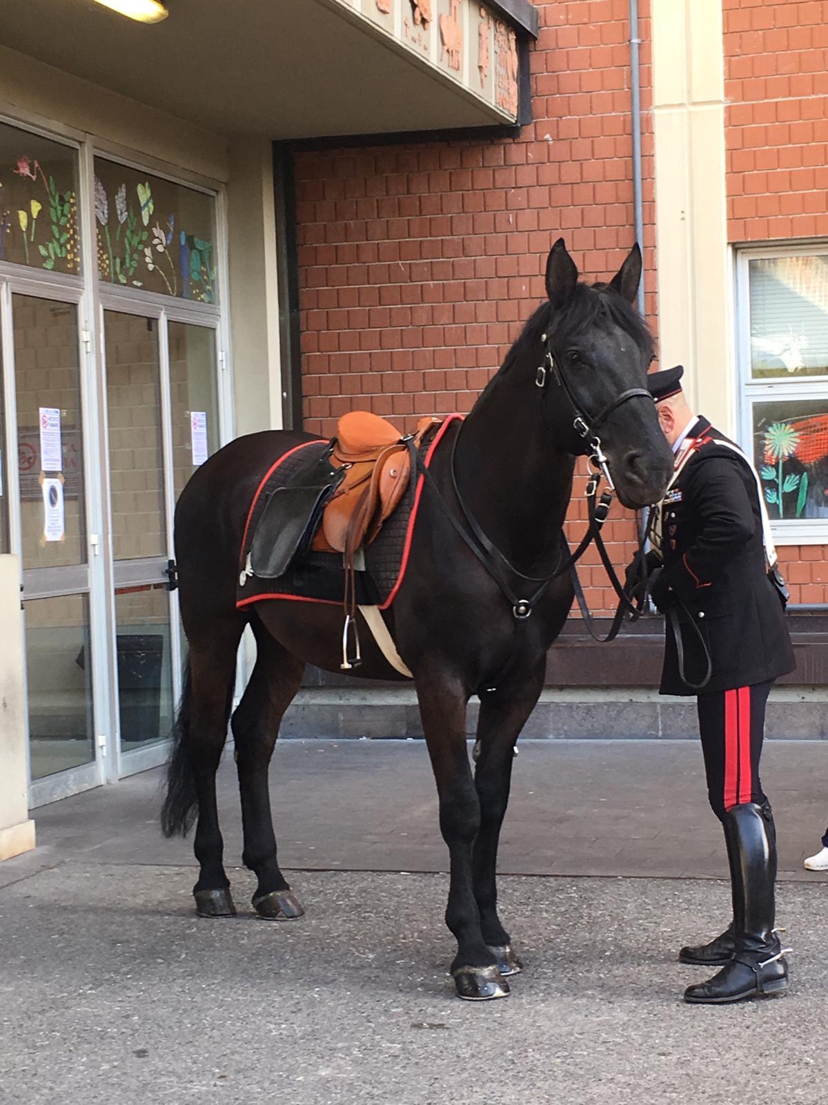 Le Scotte, Carabinieri a cavallo in visita al Dipartimento Materno Infantile (FOTO)