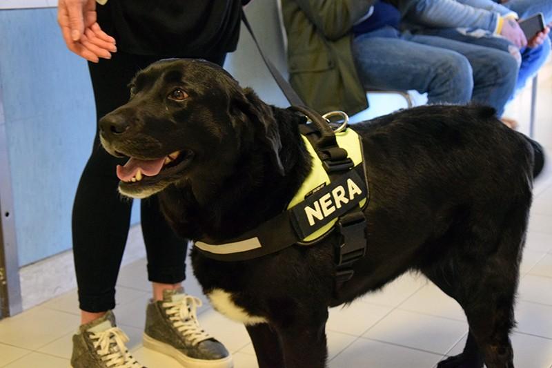 Pet Therapy in pediatria: il cane Nera dà il buongiorno ai piccoli pazienti delle Scotte- FOTO