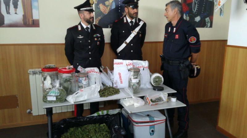 Coltivano la droga in un casolare del senese, arrestati due uomini