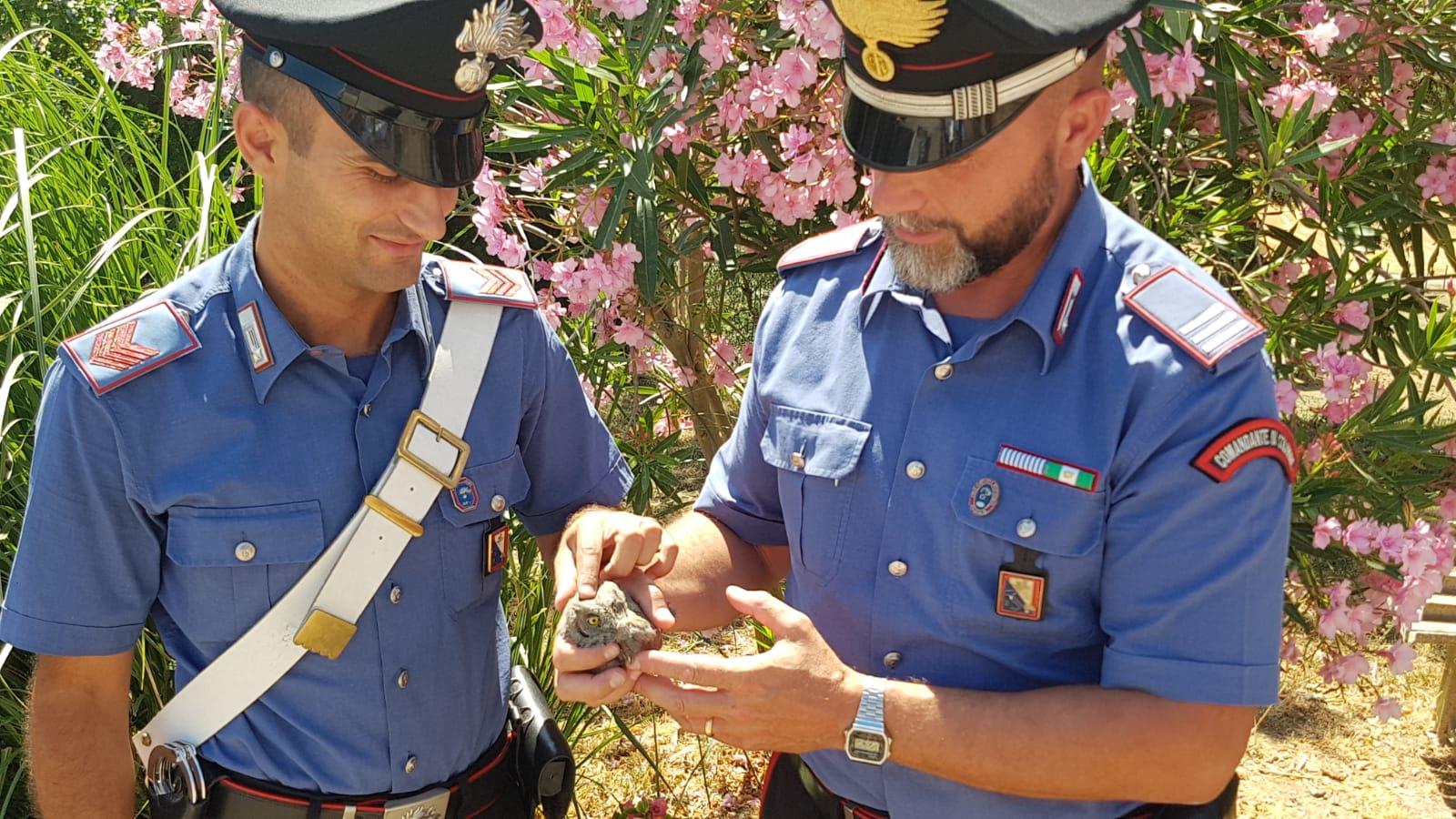 """Pulcino di Assiolo salvato dai carabinieri: """"Osvaldo"""" tornerà a volare"""
