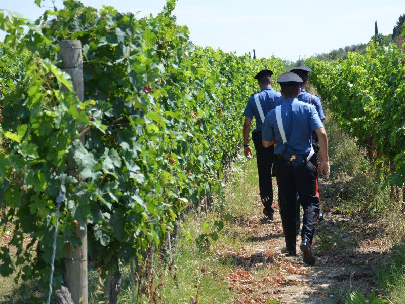 Allarme Cgil: agricoltura in Val d'Elsa, caporalato e violenze ai danni dei lavoratori