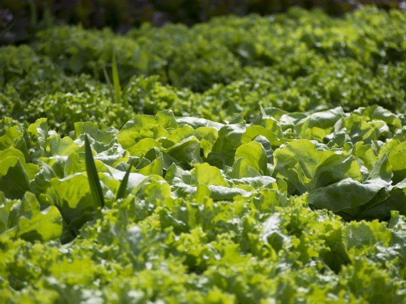 """Coltivare il proprio orto condiviso: """"Ortomangione"""" porta il cibo dall'orto alla tavola"""