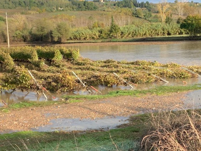 Maltempo, molte aziende agricole e terreni in ginocchio tra Valdarbia e Valdelsa. Il punto di Solfanelli (Coldiretti)