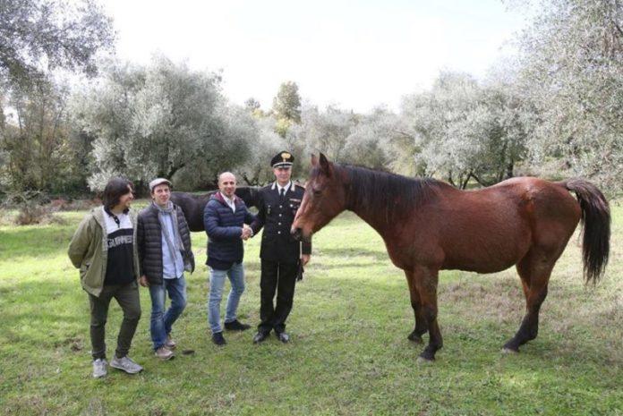 """Il ricavato di """"A Cavallo di una Fiaba"""" destinato al pensionario per i cavali del Palio di Siena"""