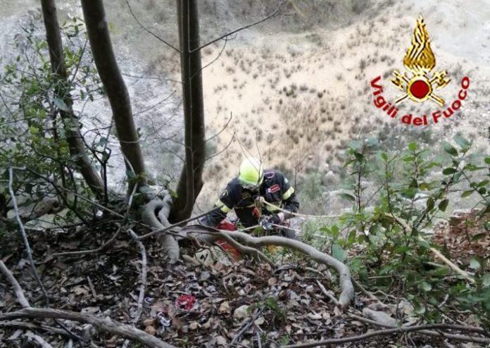 Cane cade nel dirupo di una cava, lo salvano i vigili del fuoco