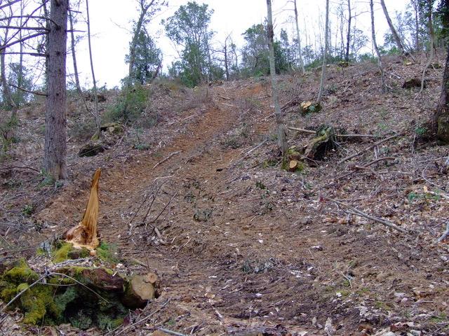 Indagini dei Carabinieri della Forestale sul taglio dei boschi della Montagnola Senese