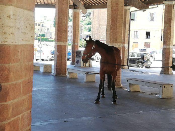 Botticello ha trovato casa: il Sindaco lo consegna alla nuova proprietaria
